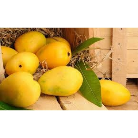 Pakistani Mangoes (Chaunsa)